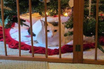 White cat sitting by Christmas tree